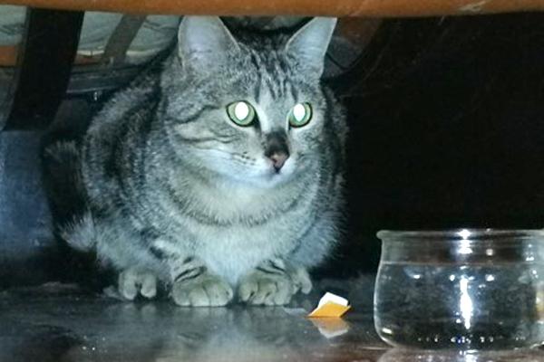 Trovata gattina giovane in zona Bolognina